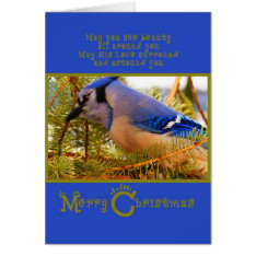 Blue Jay On Cedar Feeder W Fir Closeup Card at Zazzle