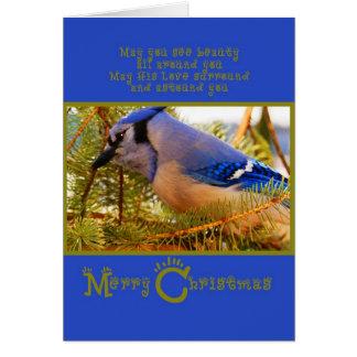 Blue Jay on Cedar Feeder w Fir Closeup Card