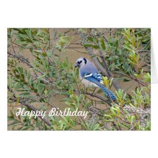 Blue Jay on Southern Wax Myrtle Birthday Card