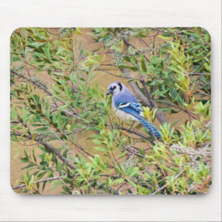 Blue Jay on Southern Wax Myrtle Mouse Pad