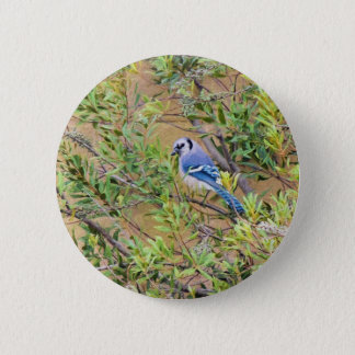 Blue Jay on Southern Wax Myrtle Pinback Button