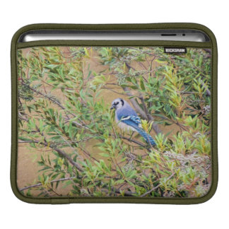 Blue Jay on Southern Wax Myrtle Sleeve For iPads