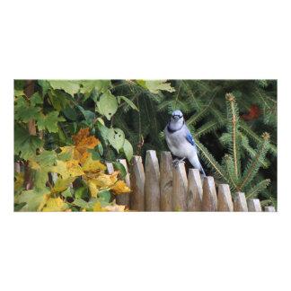 Blue Jay On The Fence Custom Photo Card