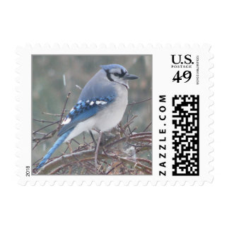 Blue Jay on tree branch Stamps