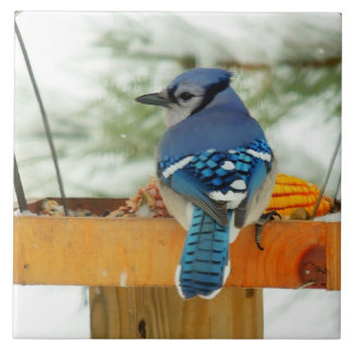 Blue Jay Peace Tile