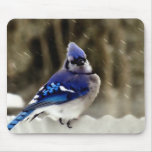 Blue Jay Photo Mouse Pad