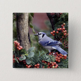 Blue Jay Pinback Button