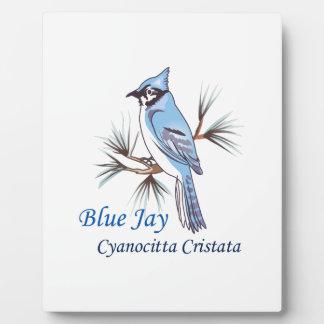 BLUE JAY PHOTO PLAQUE