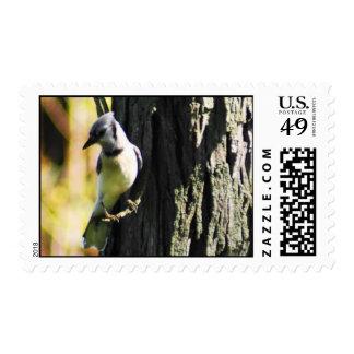 Blue Jay Stamp