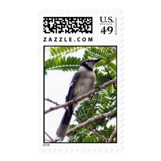 Blue Jay Postage Stamps