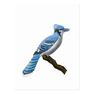 Blue Jay Post Card