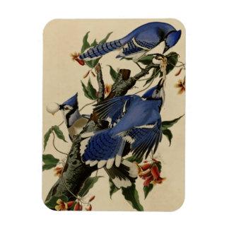 Blue Jay Rectangular Photo Magnet