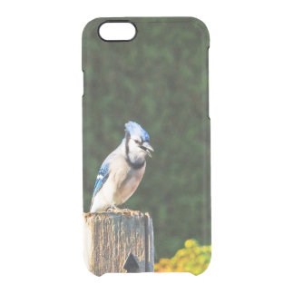 BLUE JAY SITTING ON A POST CLEAR iPhone 6/6S CASE