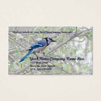 Blue Jay Songbird Business Card