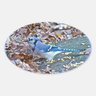 Blue Jay Songbird (Cyanocitta cristata) Oval Sticker
