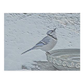 Blue Jay Songbird (Cyanocitta cristata) Postcard