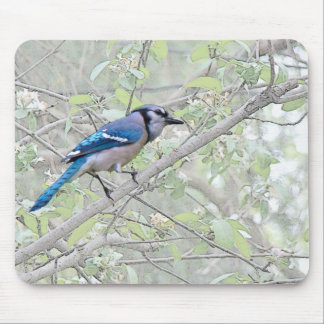 Blue Jay Songbird Mouse Pad