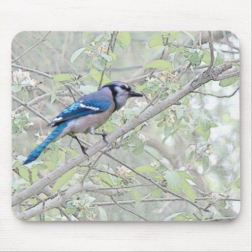 Blue Jay Songbird Mouse Pad