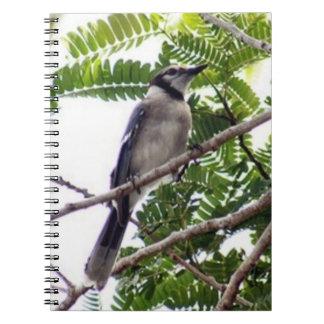 Blue Jay Spiral Photo Notebook