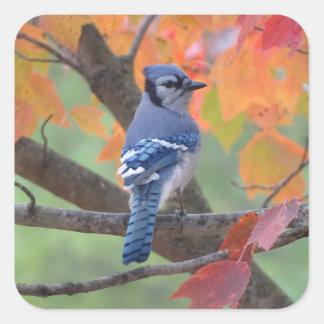 Blue Jay Square Sticker