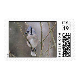 Blue Jay Stamp in the snow