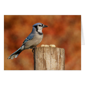 Blue Jay Stationery Note Card