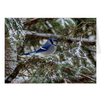 Blue Jay Wishes Card