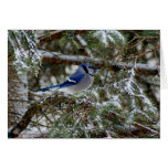 Blue Jay Wishes Greeting Card