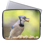 Blue jay with a peanut computer sleeve