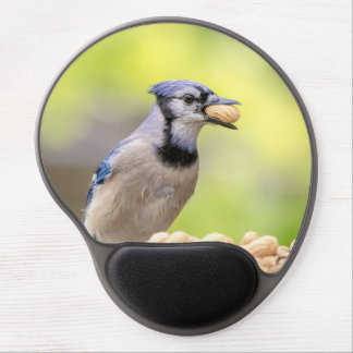 Blue jay with a peanut gel mouse pad