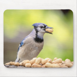 Blue jay with a peanut mouse pad