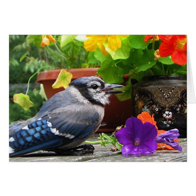 Blue Jay with Flowers