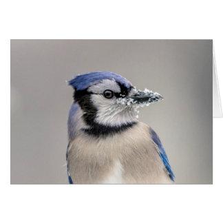 Blue jay with snow on his beak card