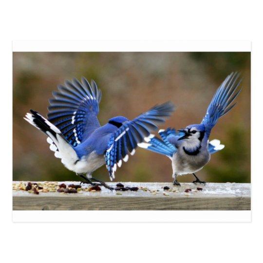 Blue Jays Postcard