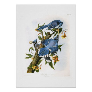 Blue Jays Poster