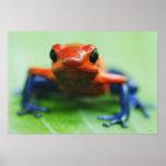Blue Jean Frog Poster