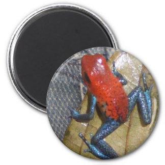 Blue Jeans Frog Magnet