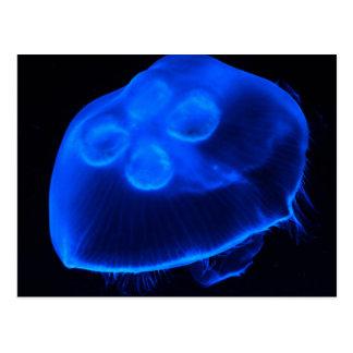 Blue Jellyfish Postcard