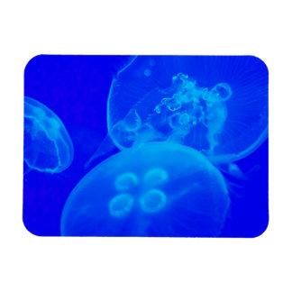 Blue Jellyfish Rectangular Photo Magnet