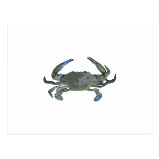"Blue ""Jimmy"" Crab Postcard"