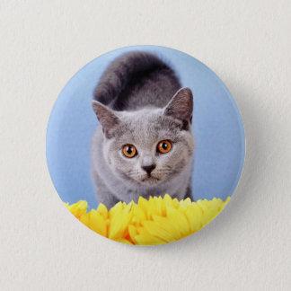 Blue kitten pinback button