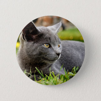 Blue Kitten taking it easy Button