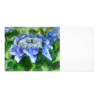 Blue Lace Cap Hydrangea Let s Dance Starlight Photo Cards