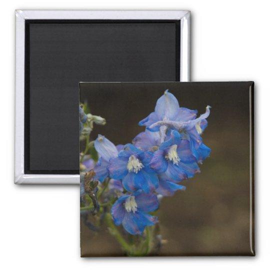Blue Larkspur   Blauer Rittersporn Magnet