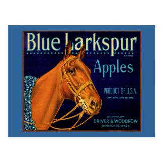Blue Larkspur Champion Horse Post Card