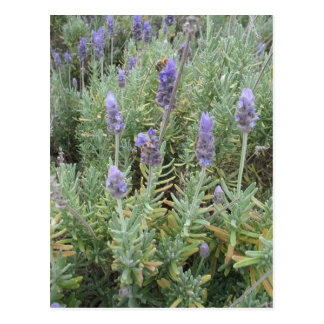 blue lavender and bee postcard