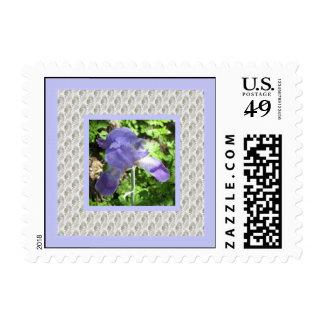 Blue Lavender Iris Postage Stamp