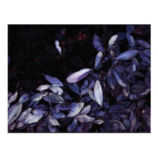 """""""Blue Leaf Shore"""" JTG Art Postcard"""
