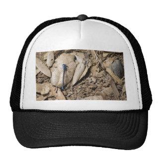 Blue Libelula Mesh Hats
