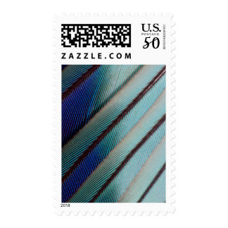 Blue Lilac Breasted Roller feather Postage